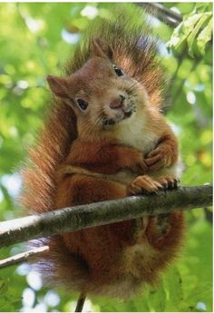 Squirrel Spirit Animal Such a delightful little charmer, popping in to surprise you with a smile and happy heart...