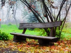 tree bench - LOVE!