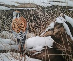 UK based Wildlife artists Alan Woollett 5 day Workshop in Colored Polychromo Pencils. June 20-24, 2016 Cost $525 Come join in in Lindale Texas for a wonderful opportunity to meet and study from London wildlife artist Alan Woollett. In this workshop we will be using Faber Castell Polychromo colored pencils, which are oil based pencils. Using a limited amount of colors he will demonstrate his techniques on feathers, layering colors, all realistic textures on a beautiful Flamingo! Demos given…