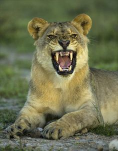 LARGE CARNIVORE RESEARCH, NORTHERN NAMIBIA