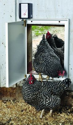 Unique features of the Pullet-Shut include side hinge, compact profile, no external switches, and 12-volt battery backup. Photo by Gail Damerow.