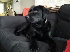 My dog Rufus (1 year)