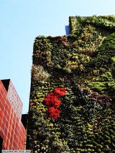 Jardín Vertical. Fundación Caixa-Fórum. Vertical Garden