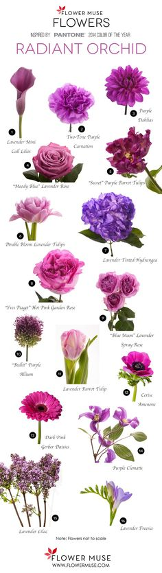 """Radiant Orchid"" flower colors - FYI for choosing flowers Arte Floral, Deco Floral, Arrangements Ikebana, Floral Arrangements, Colorful Flowers, Beautiful Flowers, Flower Colors, Light Purple Flowers, Purple Hues"