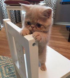 20 Tiernos Gatitos | Momentos dulces - Todo-Mail