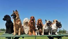 Wir bekommen einen Hundepark!  - Fluffy1.com