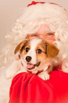 It's beginning to look like a very #Corgi Christmas! http://sulia.com/my_thoughts/c535cda7-f23f-4695-914b-19f488feed78/?pinner=124041943&