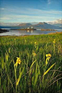 Idylic irises -   Isleornsay, Skye, Scotland