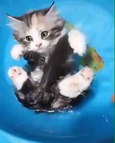 My name is kit, I like to float, on my back, I am a boat - Funny Animals - Kitty kit Cute Baby Cats, Funny Cute Cats, Cute Kitten Gif, Cute Little Animals, Cute Cats And Kittens, Cute Funny Animals, I Love Cats, Crazy Cats, Kittens Cutest