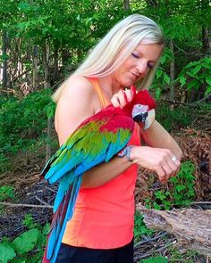 Traci Carroll with Ruby, Green-Winged Macaw Parrot Green Wing Macaw, Blue Gold, Parrots, Kittens, Wings, Bird, Pets, Instagram Posts, Lovers