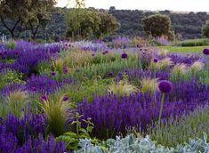 Garden - Jardin en el Casar, Madrid by Fernando Martos Perez de Ayala, via Flickr