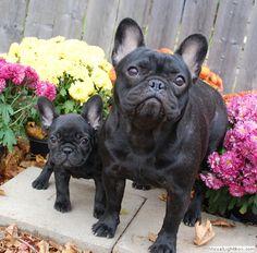 I want them both.