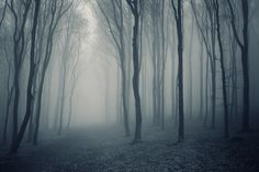 Grey Mist Forest Wallpaper Wall Mural | MuralsWallpaper.co.uk