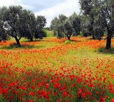 Lecce olives and poppies @ Trullo Bianca in Greece, (photo via their website.