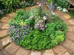 Looking for ideas for a creative container garden? See how repurposing and recycling can transform your outdoor home.
