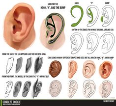I like ears. With these basic illustrations, it would be easy to make believable variations - like elf ears. drawing tutorials, sketch, 3d character, anatomi, refer, art, ear tutori, ears, character design