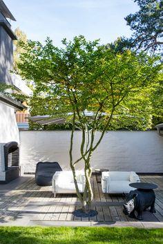 japanische Acer palmatum Best Picture For Garden Types For Your Taste You are looking for something, Modern Landscape Design, Modern Garden Design, Modern Landscaping, Modern Design, Garden Types, Acer Palmatum, Small Gardens, Outdoor Gardens, Terrace Garden Design