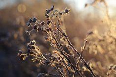 Carpe Diem: Beautiful winter