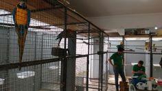 Operação em Guanhães apreende 54 pássaros silvestres, três deles em extinção