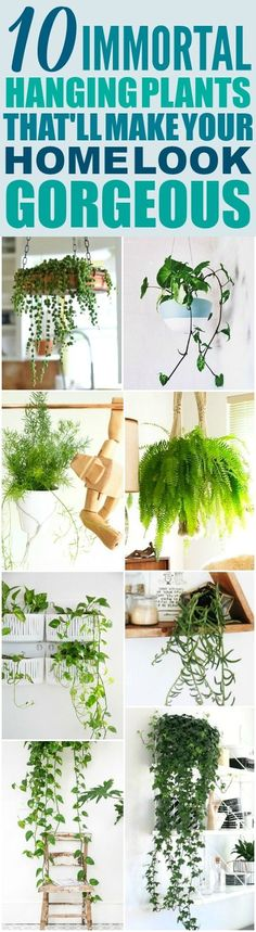 These 10 Low Maintenance Hanging Plants are THE BEST! Im so happy I found these AMAZING ideas! Now I have a great way to decorate my home and not kill the plants! - Home And Garden