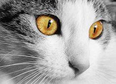 """""""La leyenda budista sobre los gatos"""""""