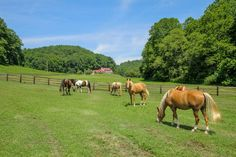 Equestrian Estate for sale in Williamson & Maury Counties County in Tennessee. Gorgeous private setting outside Leipers Fork, Tennessee with seven natural springs flowing from caves and out of limestone rocks all on 216 acres making up Covenant Springs Farms. Complete with brick Main House of 4641 sq. ft. featuring 5 bedrooms, 4 full and 2 half baths. Two story guest house has 2884 sq. ft. and a 4 bedroom caretaker's house with 1473 sq. ft.