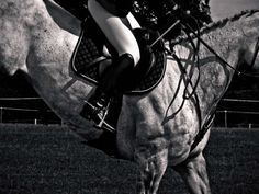 Show Jumping - Horse and Rider #1