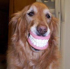 46 Best Dental Humor Images Dental Dental Health Dental Humor