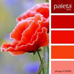 Červená - je jednou ze tří primárních barev a její vlastnosti jsou všeobecně známé. Tato barva úspěchu, zdraví a erotiky též uvolňuje blokované pocity a zrychluje srdeční činnost člověka. Je velkým pomocníkem při utváření útulného prostředí. Je vhodné ji použít v místnostech, kde chceme upoutat pozornost, podpořit aktivitu a energii. Červenou lze...