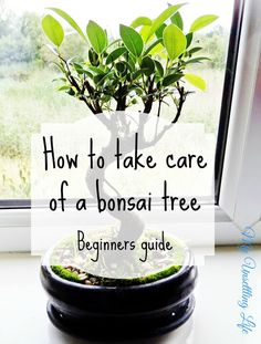How to care of a bonsai tree - Beginners guide http://www.myunsettlinglife.co.uk/2015/08/how-to-take-care-of-bonsai-tree.html