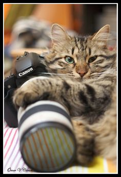 Photographer kitty