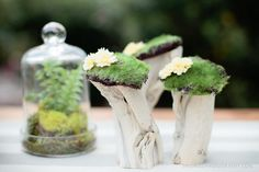 a perfect mini centerpiece when filled with moss and cherry blossoms