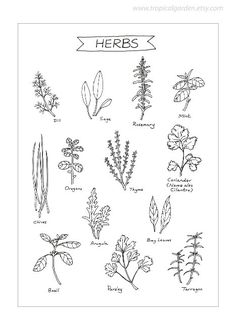 Herbs - 8'x11' Print - Ink Illustration - Culinary Art Collection