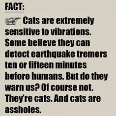 Lol but i still love cats  M<3