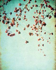 Red hots - 8x10 Fine Art Photograph.  honeytree  $30
