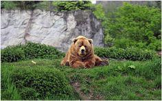 Brown Bear Cute Funny Wallpaper | brown bear cute funny wallpaper 1080p, brown bear cute funny wallpaper desktop, brown bear cute funny wallpaper hd, brown bear cute funny wallpaper iphone