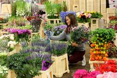 Pippa at The New Covent Garden Flower Market in London's Nine Elms. Note the basket of thistle in foreground. Bloomfield of London?