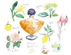 Shalimar Guerlain perfume watercolor painting, Fine art print, Paris decor, Flower, Floral Fragrance