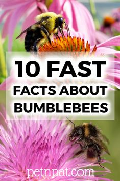 10 Fast Facts About Bumblebees Animals For Kids, Farm Animals, Animals And Pets, Pet Nutrition, Animal Nutrition, Beekeeping Equipment, Beekeeping Supplies, Animal Quotes, Animal Memes
