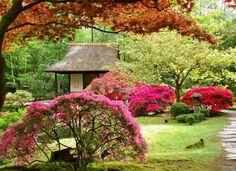 jardin japonais - arbustes et buis exotiques, arbres et pavillon en bois assorti