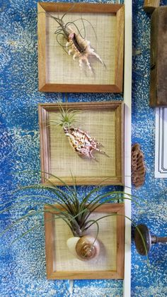 Living wall 'fhotos'   Air plents