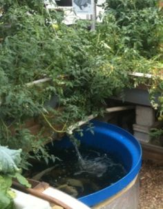 How to build your own aquaponics system, watch the video of a small aquaponics system !
