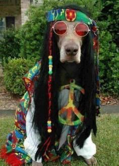 """hippie hairstyles 522910206712097301 - Hippie Hound Dog's Tip of the Day: Watch the movie """"Dazed and Confused""""… Awesome Hippie Era Movie! Also, it will give you great fashion ideas for bellbottoms! Animals And Pets, Funny Animals, Cute Animals, I Love Dogs, Cute Dogs, Costume Chien, Chien Halloween, Halloween Diy, Happy Halloween"""