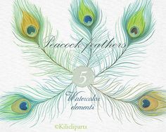 Watercolor peacok feathers, peacok feathers clipart, diy art, wedding invitation, watercolor clipart.