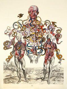 balintzsako:  Vesalius Collage