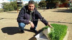 Agri GreenGrow - Benefits of Green Fodder Benefit, Green