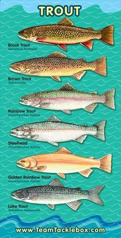 Fish ID, Trout - naturewalkz