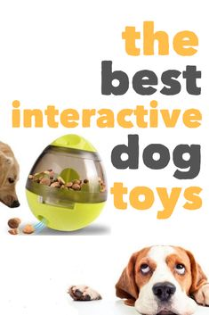 What are the best interactive dog toys for the best mental stimulation for bored dogs? Interactive toys can be a nice addition for bored dogs when the weather's too cold to play outdoors and for low energy dogs looking for some stimulation. Smart Dog Toys, Cute Dog Toys, Diy Dog Toys, Best Dog Toys, Pet Toys, Best Toys For Puppies, Toys For Bored Dogs, Low Energy Dogs, Dog Toys
