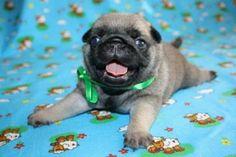 Cute Baby Puppy
