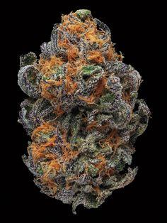 Beautiful Buds #cannabis #weed